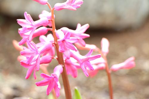 フォト 春の花